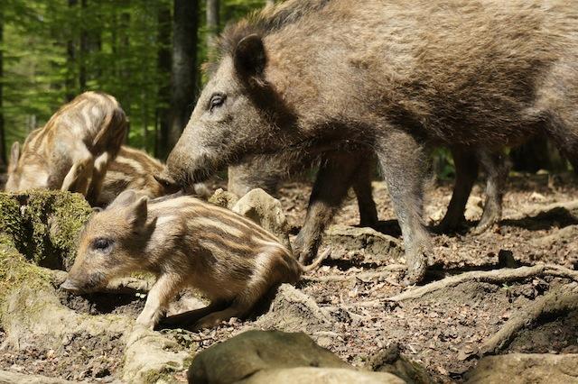 Wandern mit Kindern zur Sauschütten von Grünwald.  Foto (c) Kinderoutdoor.de