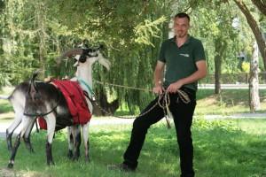 Mirko Zimmermann und seine Ziege namens Steffen (Foto: TMB-Fotoarchiv/Steffen Lehmann)
