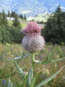 In Kärnten ist die Natur noch in Ordnung.  Foto (c) Kinderoutdoor.de